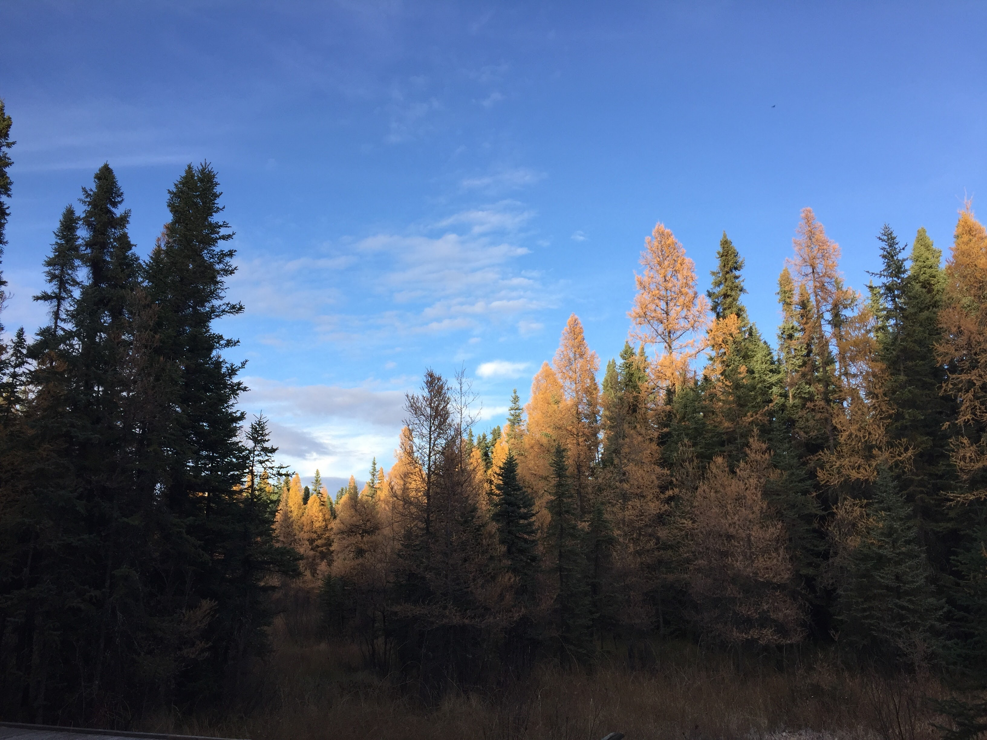 Hiking around #YEG and Area (Trails #1 – #5)
